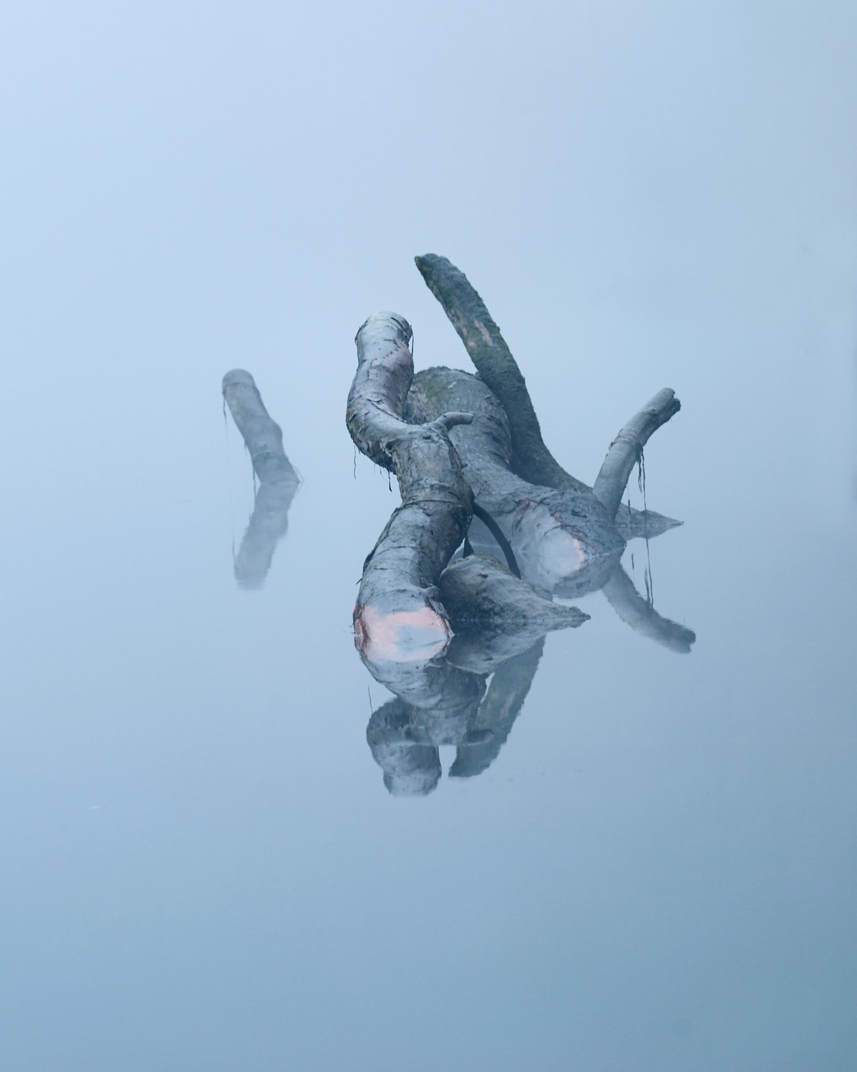 Adda con nebbia e tronchi semiemersi_20